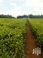 5 Acres for Sale Fronting Limuru Nazareth Tarmac Road | Land & Plots For Sale for sale in Kiambu, Ngecha Tigoni
