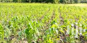 80acres In Mutomo Kanziko   Land & Plots For Sale for sale in Kitui, Mutomo