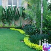 Landscaping And Gerdening Service | Landscaping & Gardening Services for sale in Nairobi, Nairobi Central