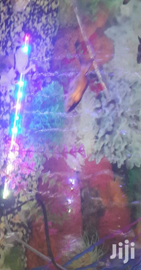 Archive: Led Light With Aircurtain