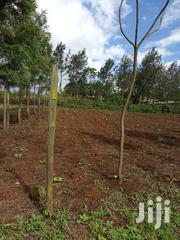 Prime 1/8 of an Acre Kibiko at 2.9million   Land & Plots For Sale for sale in Kajiado, Ngong