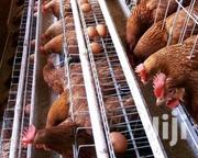 Electrogalvanised Chicken Cages | Farm Machinery & Equipment for sale in Mombasa, Changamwe