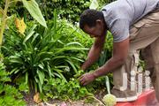 Professional Gardeners For Hire/Our Experts Will Do The Job | Landscaping & Gardening Services for sale in Nairobi, Kileleshwa