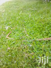 A Prime Plot Located Within Olkalao Town ,50 By100, Price 450000   Land & Plots For Sale for sale in Nyandarua, Karau