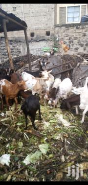 Mature Goats For Sale | Livestock & Poultry for sale in Nairobi, Kariobangi South