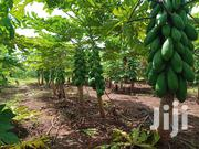 Pawpaws Red And Yellow Fresh   Feeds, Supplements & Seeds for sale in Kiambu, Mang'U
