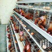 Layer Poultry Battery Cages | Livestock & Poultry for sale in Nairobi, Kasarani