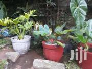Potted Plants | Landscaping & Gardening Services for sale in Nairobi, Kilimani