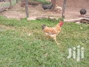 10 Broilers On Sale | Livestock & Poultry for sale in West Pokot, Kapenguria