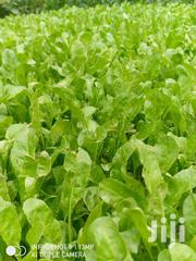 Nursery Bed Seedlings | Feeds, Supplements & Seeds for sale in Kiambu, Juja