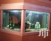 Aquariums And Ponds | Fish for sale in Nairobi, Nairobi Central