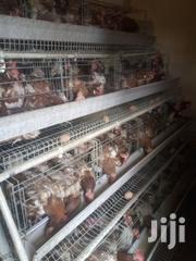 Ex-layer Chicken | Livestock & Poultry for sale in Nairobi, Kahawa