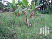 1acre on Sale at Gatitu | Land & Plots For Sale for sale in Nyeri, Gatitu/Muruguru