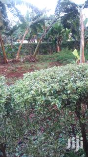 NYERI 1/4 Acre Ciaraini | Land & Plots For Sale for sale in Nyeri, Kamakwa/Mukaro