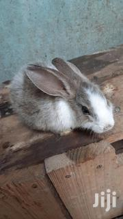 Rabbit For Sale   Livestock & Poultry for sale in Mombasa, Majengo