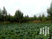 Kales, Spinach And Cabbages For Sale | Feeds, Supplements & Seeds for sale in Nyandarua, Magumu