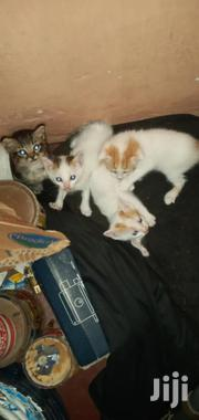 Baby Male Purebred Exotic | Cats & Kittens for sale in Mombasa, Tudor