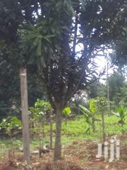 Land for Sale | Land & Plots For Sale for sale in Nyeri, Rware