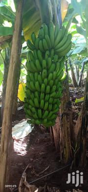 Ripening Banana | Feeds, Supplements & Seeds for sale in Kiambu, Kiamwangi