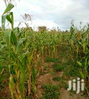 Narumoru Waheire 1 Acre Agricultural Residential Land for Sale   Land & Plots For Sale for sale in Nyeri, Naromoru Kiamathaga