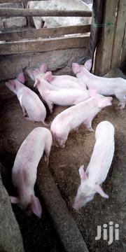 3 Months Piglets | Livestock & Poultry for sale in Murang'a, Kariara