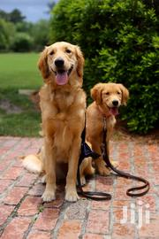 Dog Walking Service Professionals In Nairobi | Pet Services for sale in Nairobi, Nairobi Central