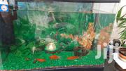 Fish Aquarium | Fish for sale in Nairobi, Parklands/Highridge