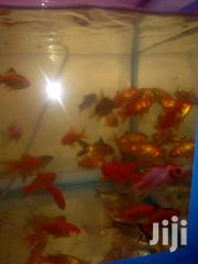 Fish, Fish Food | Fish for sale in Nairobi, Nairobi Central