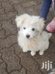 Baby Male Mixed Breed | Dogs & Puppies for sale in Nairobi, Westlands