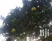 Seedless Oranges | Meals & Drinks for sale in Murang'a, Ithanga